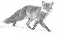 Jura sauvage photographies  Fabien Gréban - photographe animalier